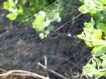 web Streamwatch spider